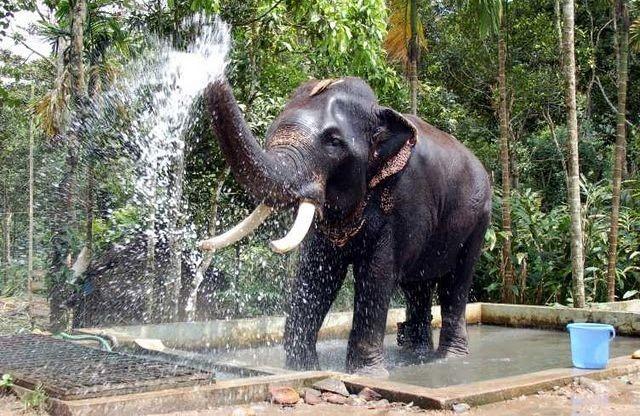bath-to-an-elephant
