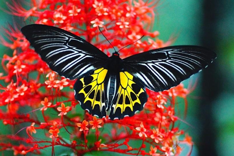 butterfly-sanctuary-in-ponda