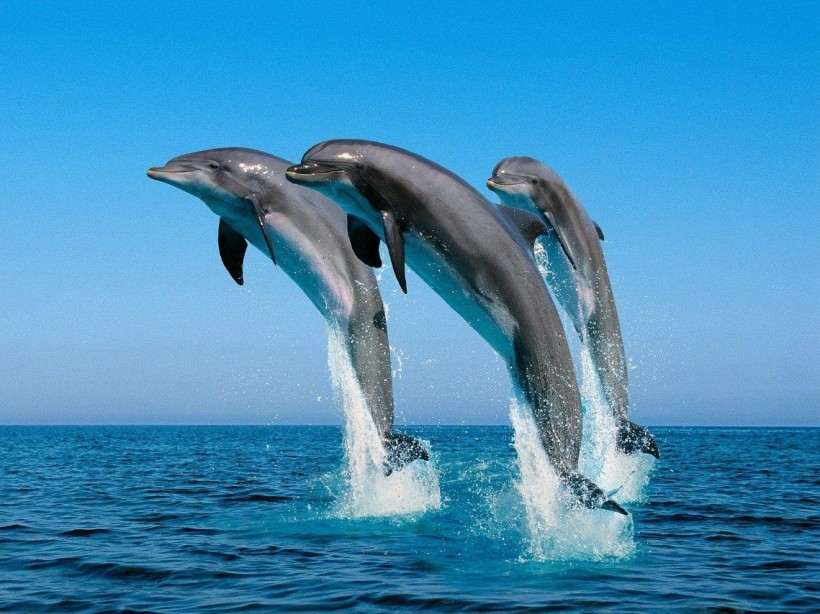 play-with-dolphins